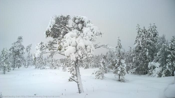 Фотографии с камеры Nokia 1020