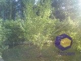Фотографии с камеры SonyEricsson S500i